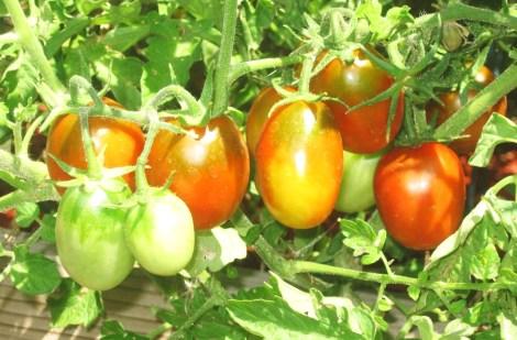 HD Photos Harvest 007