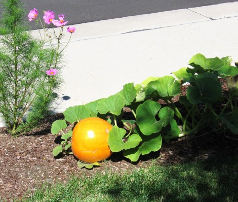 Decorative Gardening