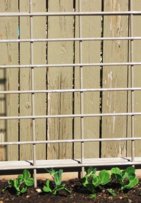 Trellis Iron Grid