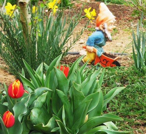 HOMESTEADING Downsized : Baby Steps to Life's Independence