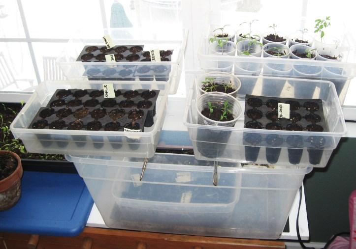 Indoor Seed Starter