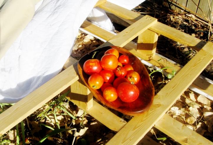 December Tomatoes